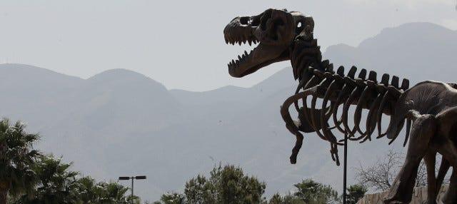 Excursión al Museo del Desierto