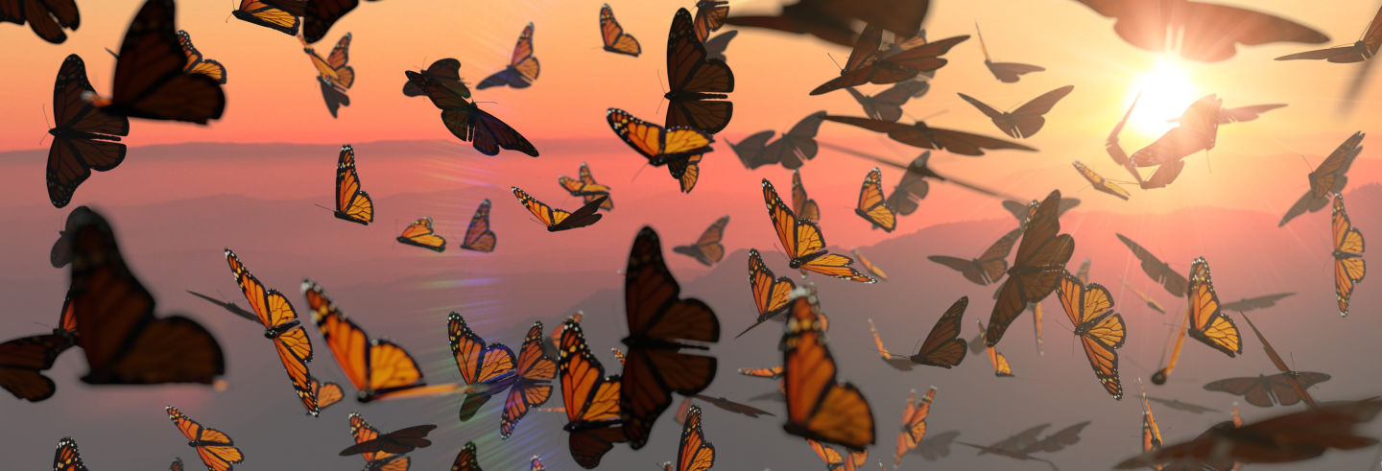 Excursión al santuario de mariposas monarca Sierra Chincua