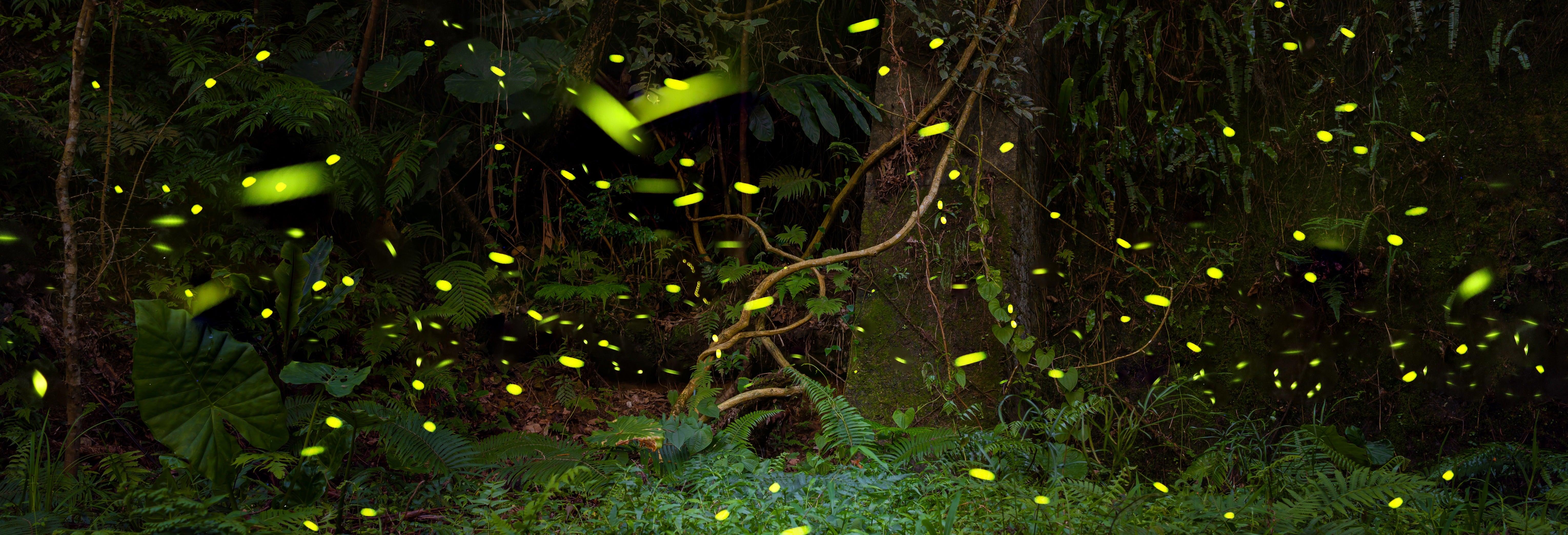 Tirolina en la presa de Umécuaro + Avistamiento de luciérnagas