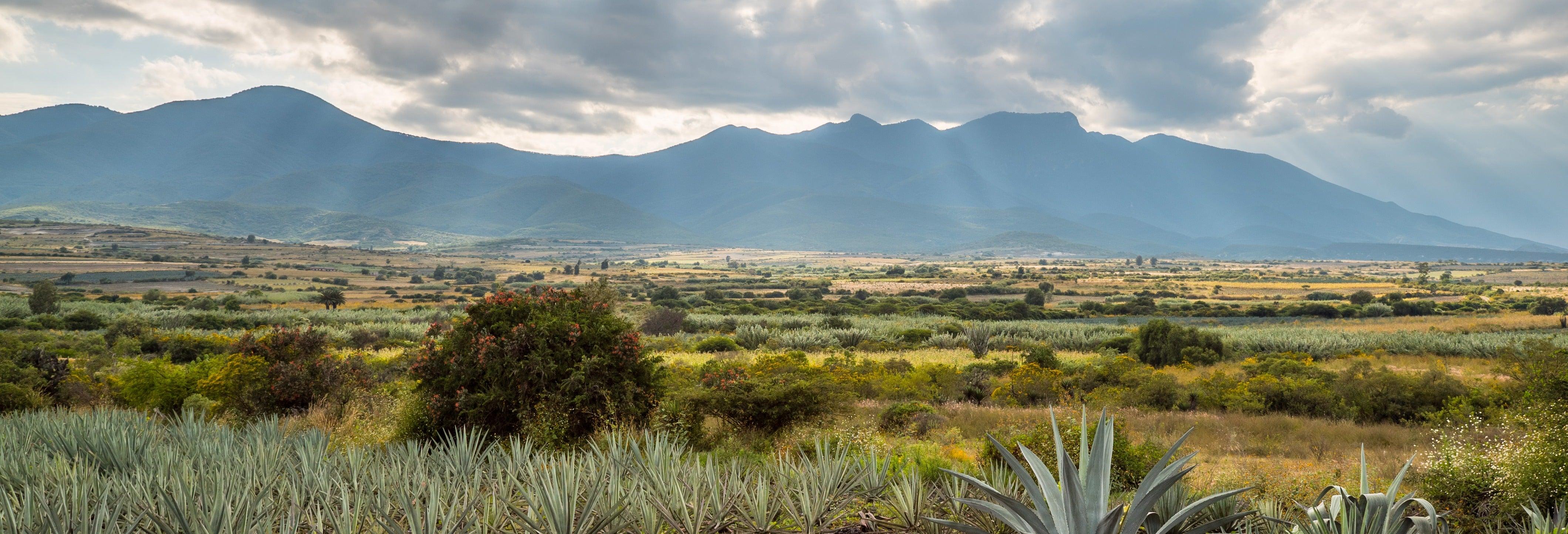 Tour de 2 dias pelo vale de Oaxaca