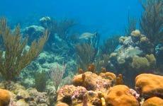 Excursión a la bahía de Akumal + Cenote X Tun