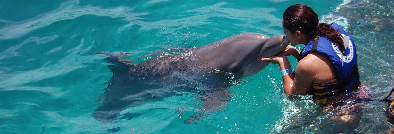 Nadar com golfinhos na Playa del Carmen