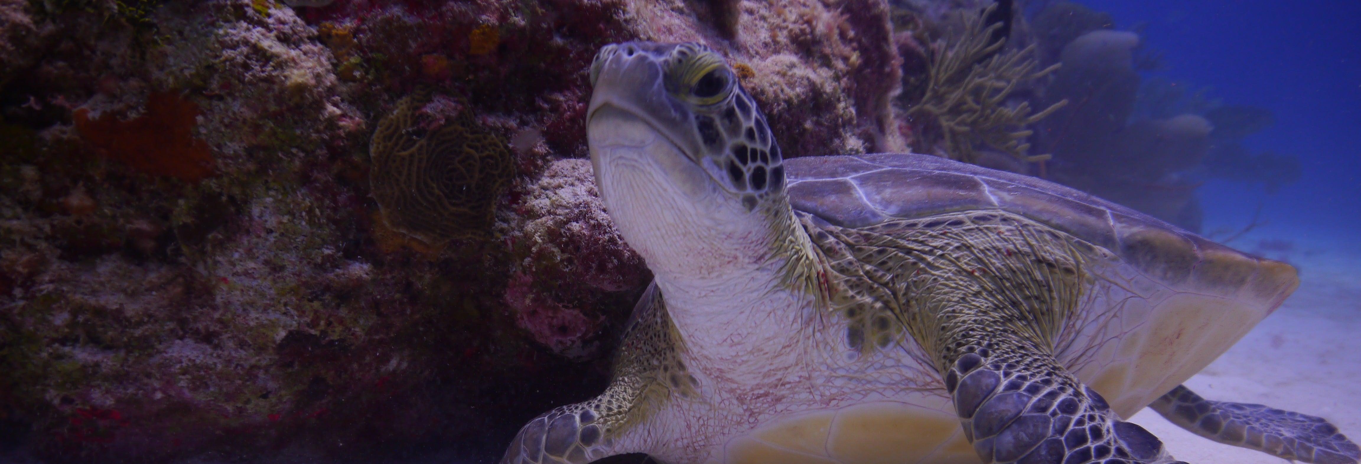 Snorkel en Tulum y Chikin Ha