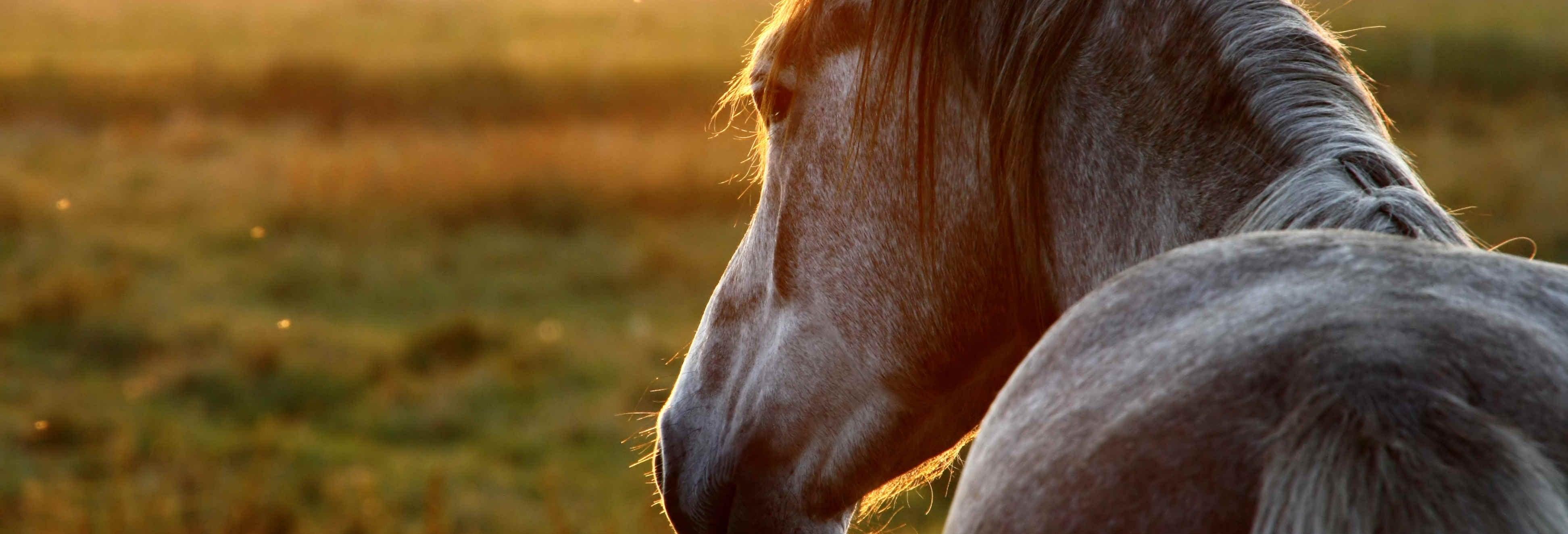 Paseo a caballo por San José Manialtepec + Aguas termales