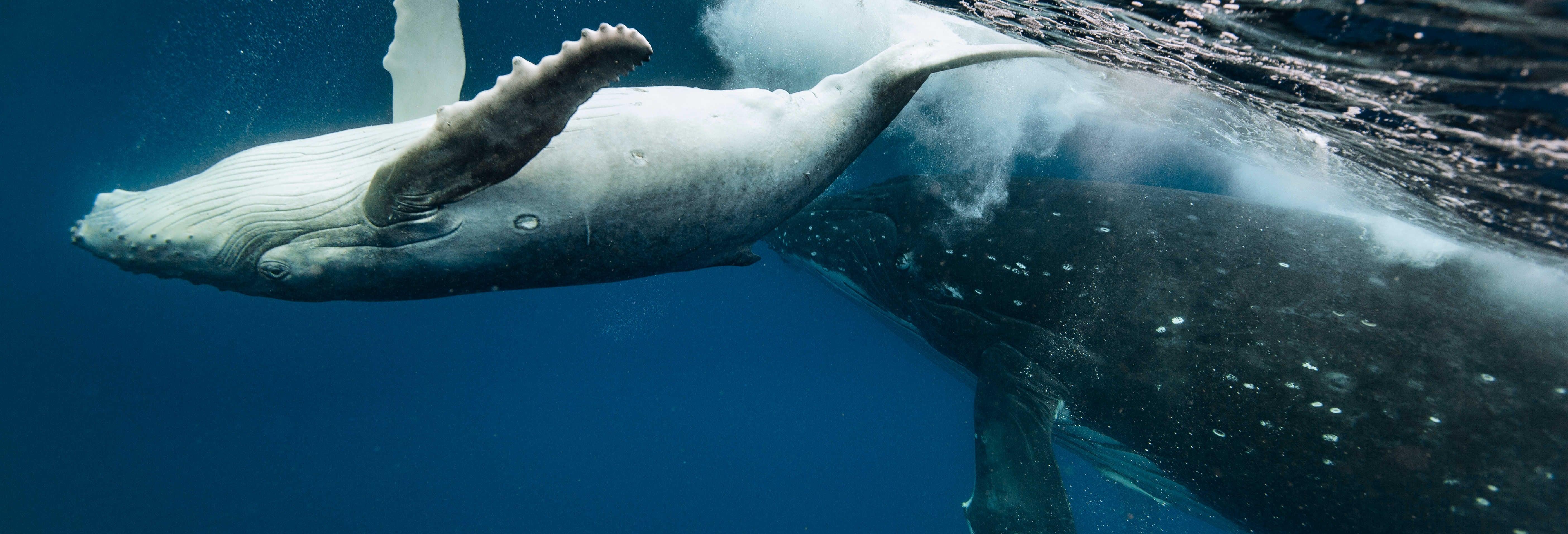 Avistamento de baleias em Puerto Vallarta