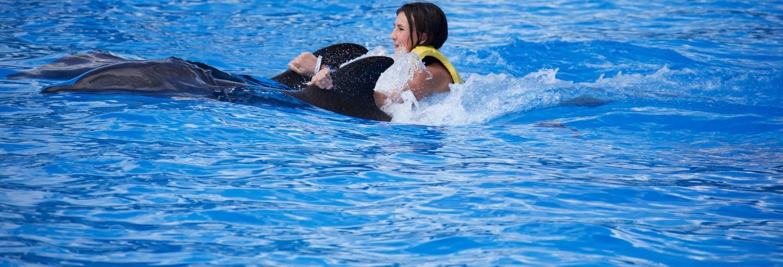 Nadar com golfinhos no Parque Aquaventuras