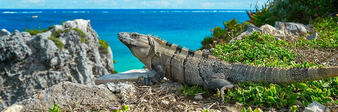Destinos en Riviera Maya