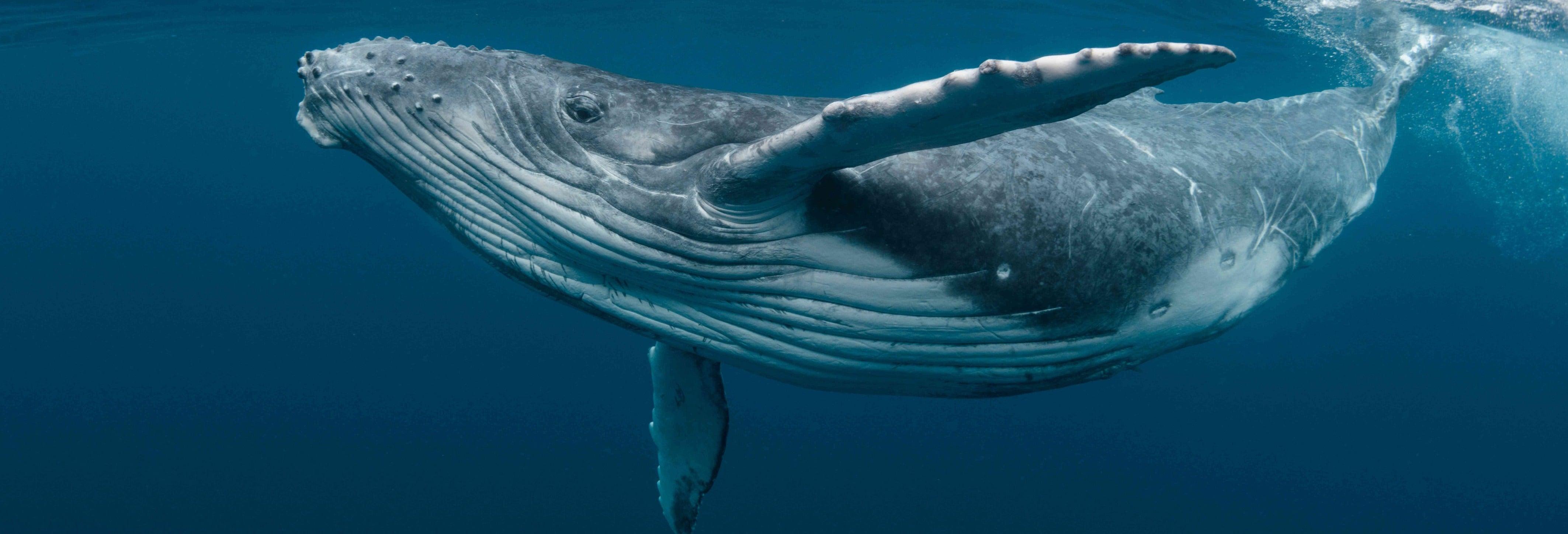 Avistamento de baleias na Riviera Nayarit