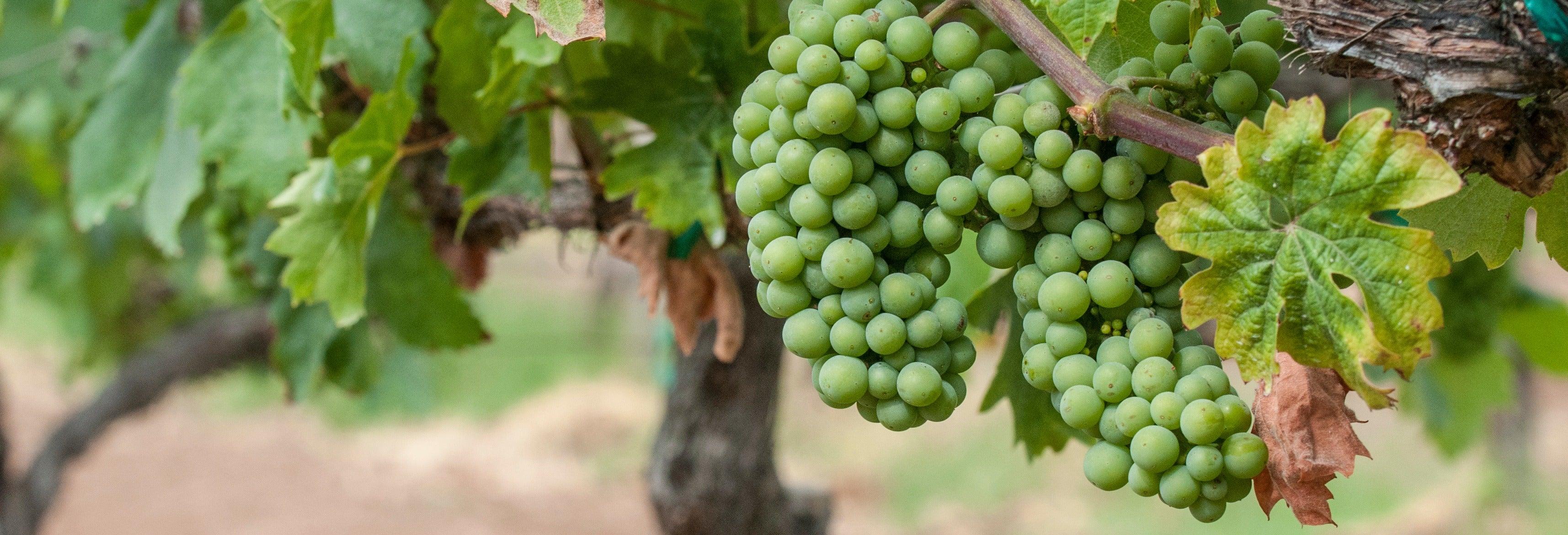 Tour del vino por el valle de Guadalupe