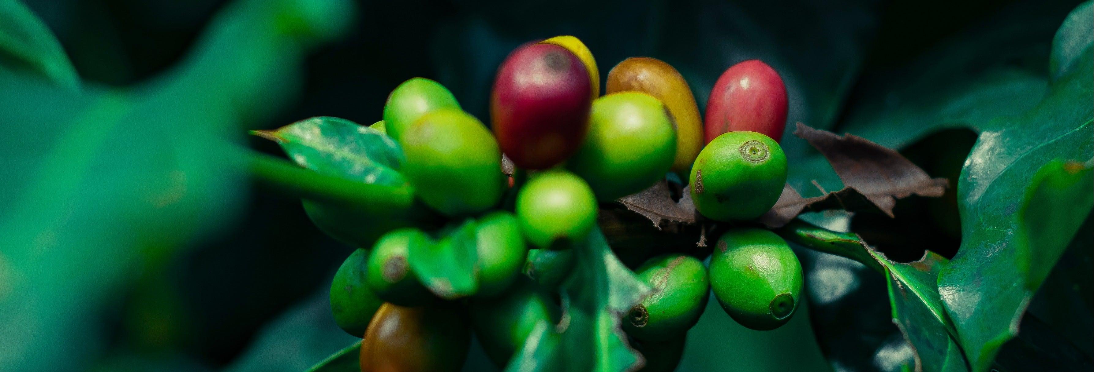 Tour do café por Coatepec