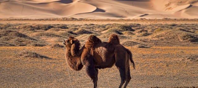 Excursion dans le désert de Semi Gobi