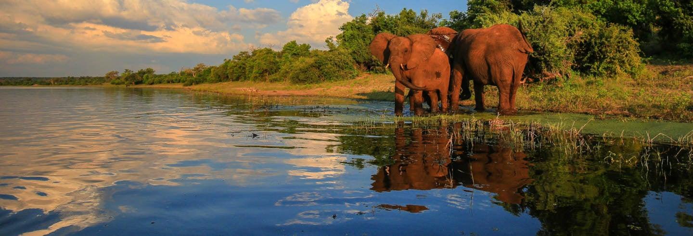 Safári pelo Parque Nacional Kruger