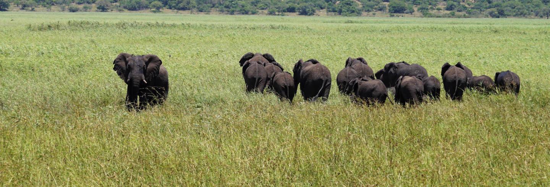 Safári pela Reserva Especial de Maputo