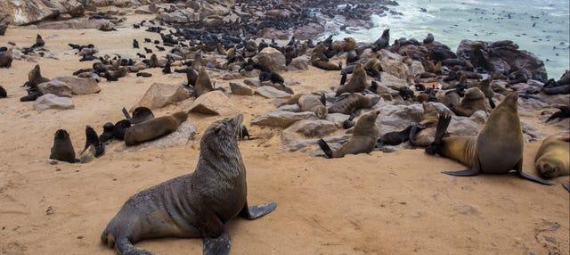 Réserve de lions de mer de Cape Cross