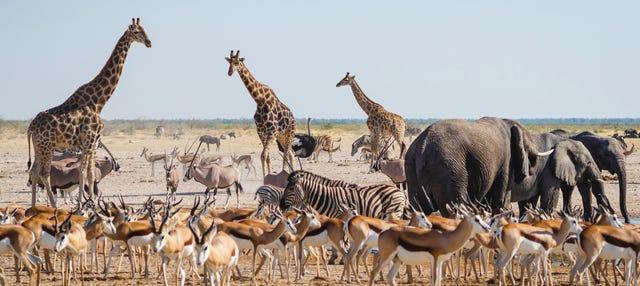 Safári de 4 dias pelo Parque Nacional Etosha