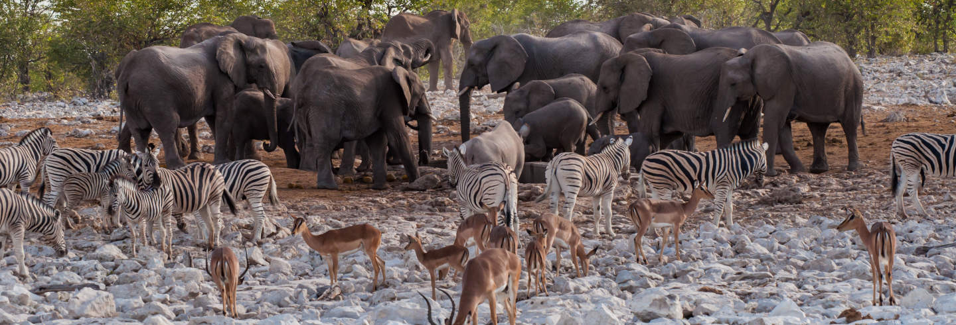 Safari de 4 días por el Parque Nacional Etosha