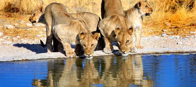 Safári de 8 dias pelo melhor da Namíbia