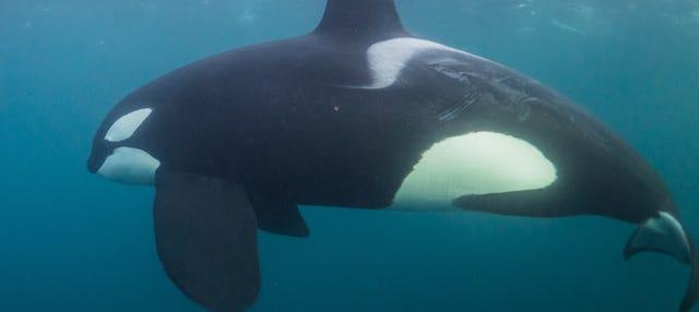 Avistamiento de ballenas en los fiordos noruegos