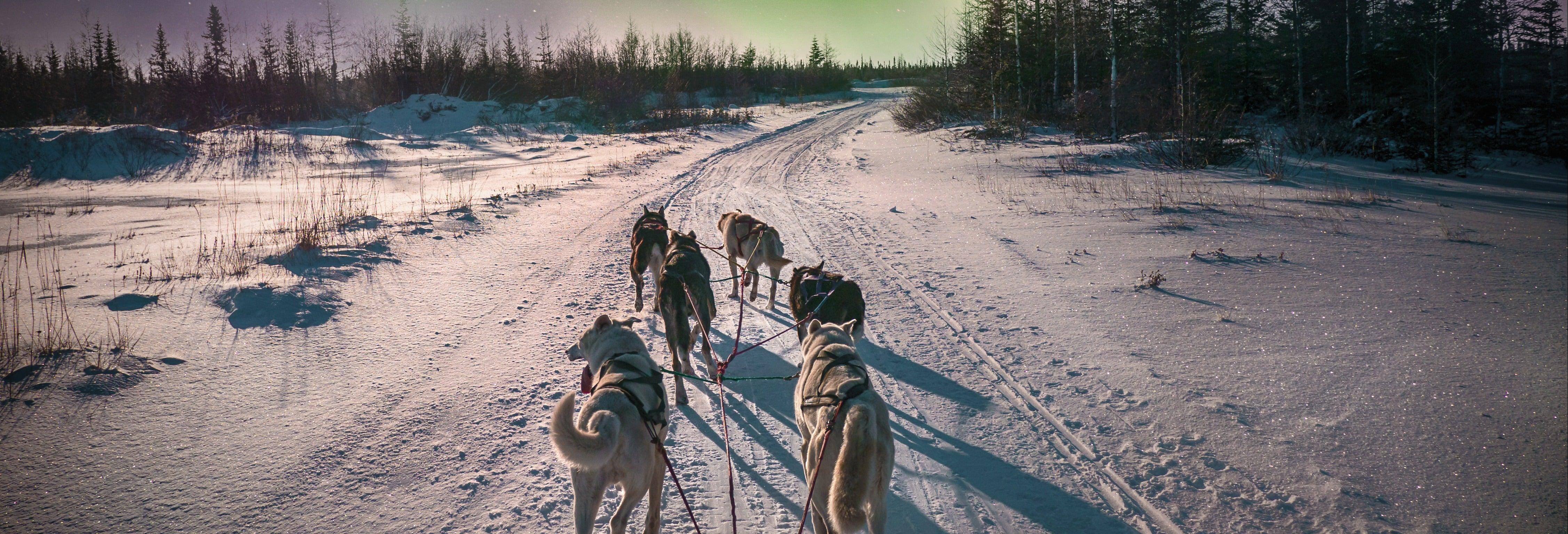 Paseo en trineo de renos bajo la aurora boreal