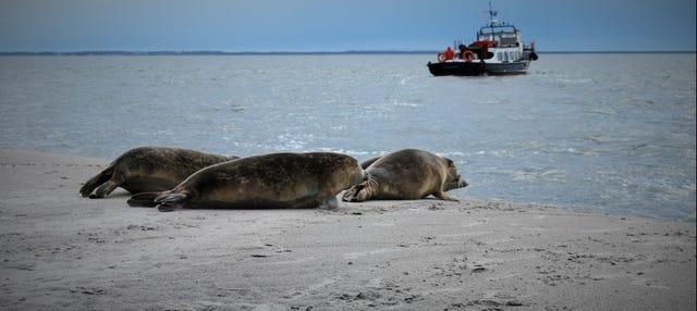 Crucero por el mar de Frisia con avistamiento de focas