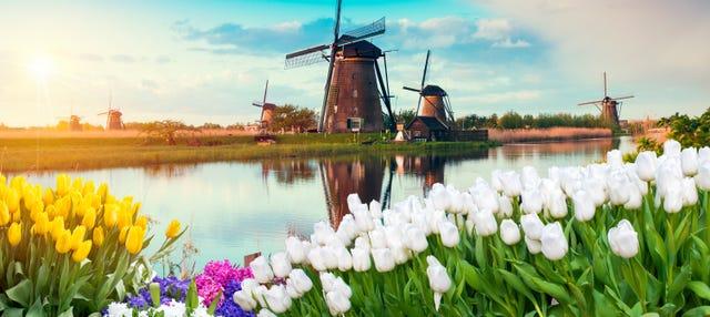 Excursión a Gouda y molinos de Kinderdijk