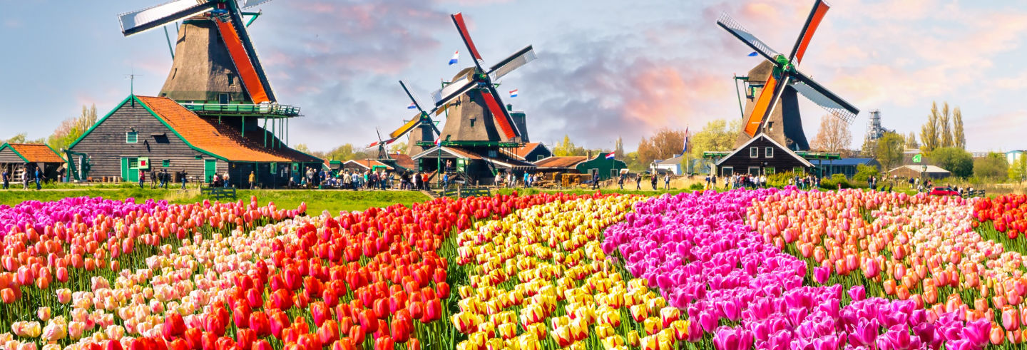 Excursion à Keukenhof