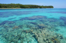 Excursión a Cayo Zapatilla y Cayo Coral