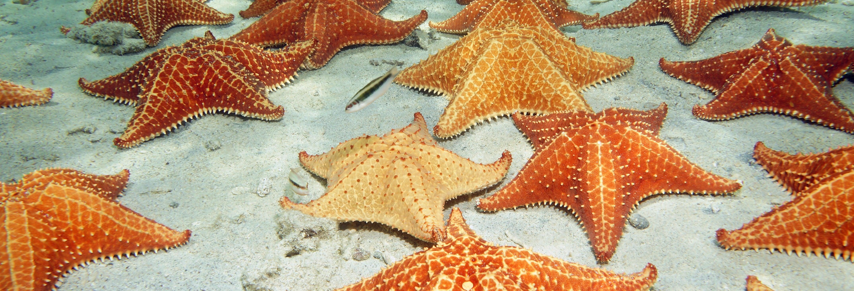 Excursão à Playa Estrella e Isla Pájaros