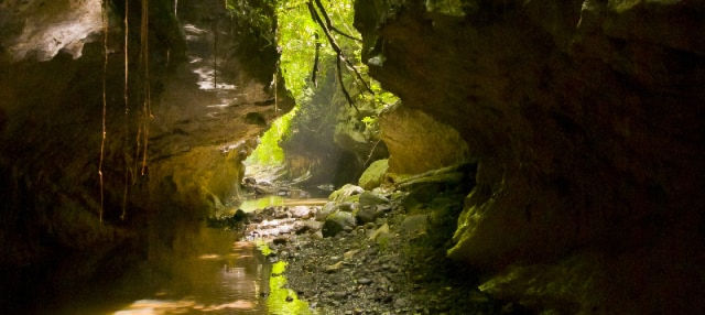 Excursion aux grottes de Bayano + Kayak sur le río Tigre