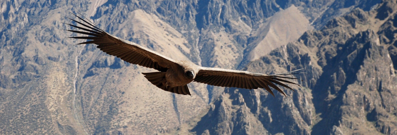 Excursión privada desde Arequipa
