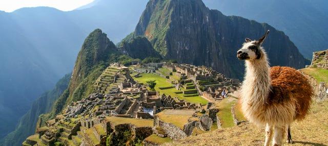 Escursione a Machu Picchu + Montagna Machu Picchu