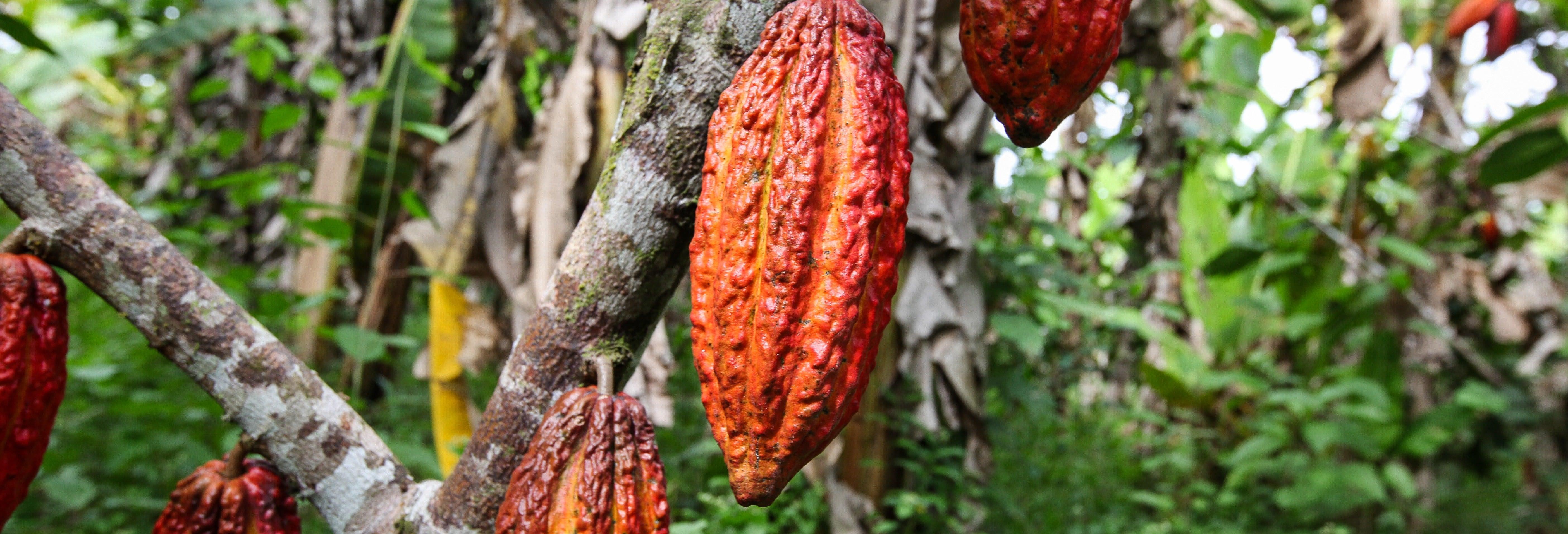 Tour del cacao e della Valle Sacra degli Inca in 2 giorni