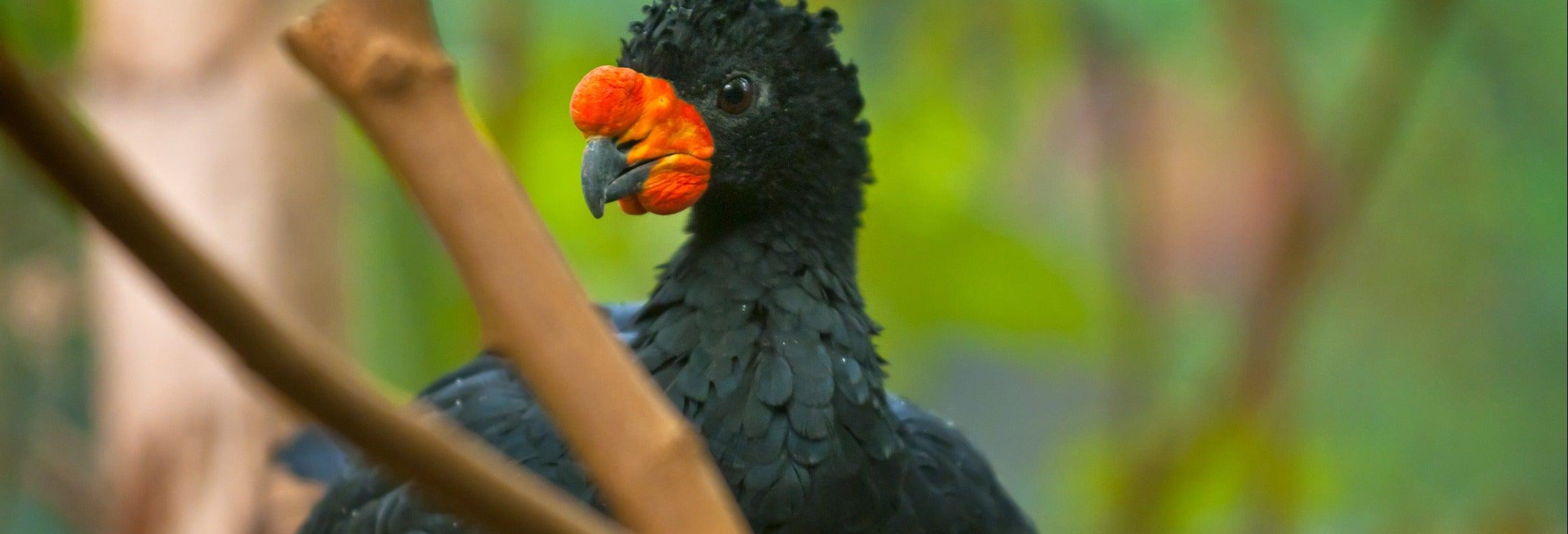 Tour de 4 dias pelo sul do rio Amazonas com avistamento de aves