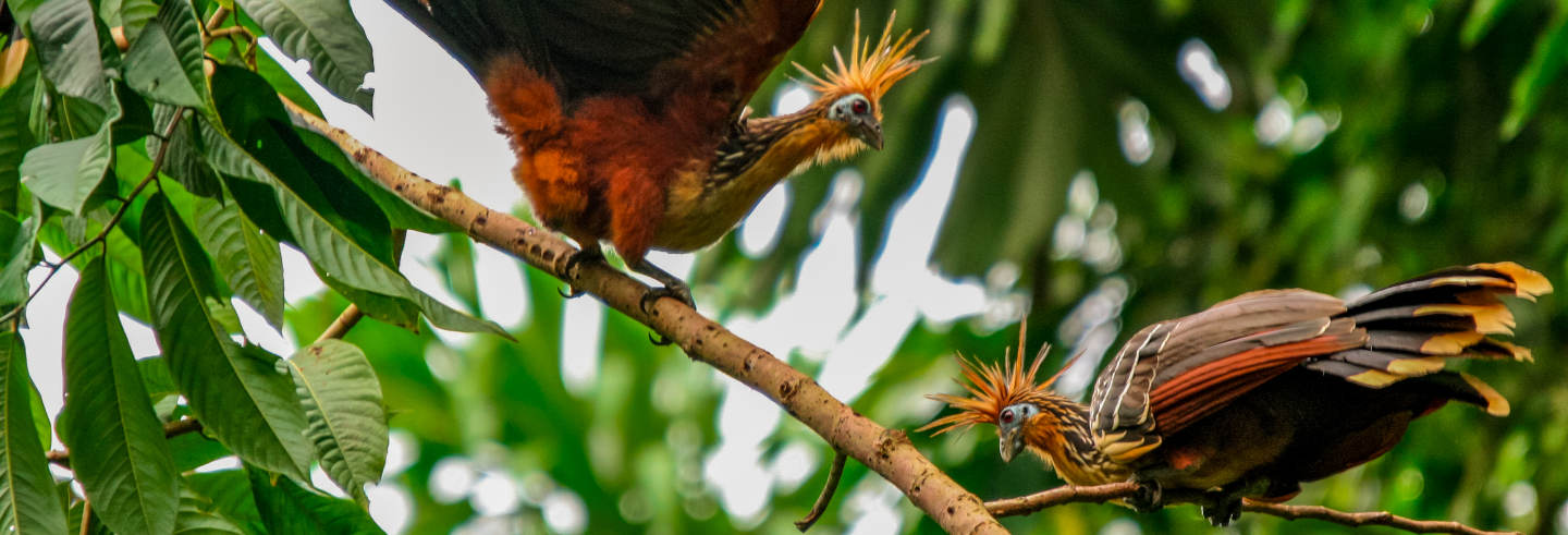 Tour de 3, 4 o 5 dias pelo sul da Amazônia peruana