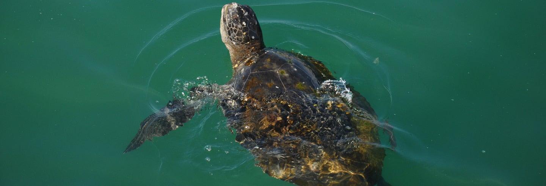 Nado con tortugas en El Ñuro + Punta Veleros