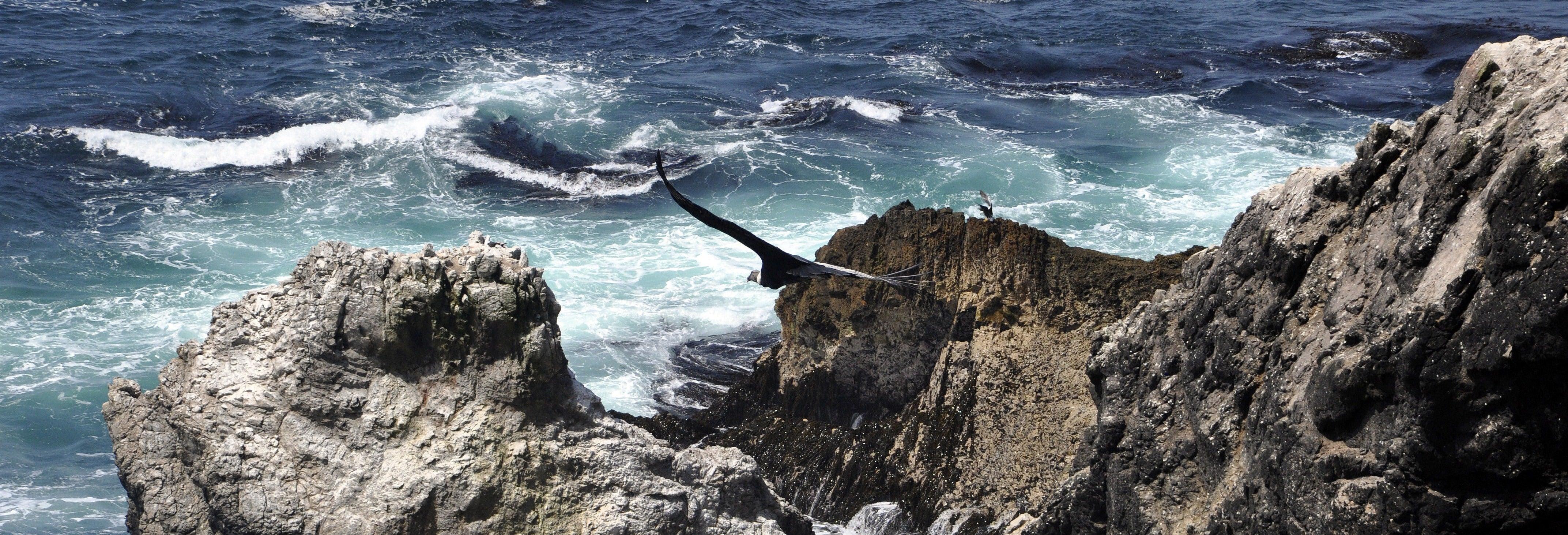 Excursion à la Bahía San Fernando + Sandboard à Nazca