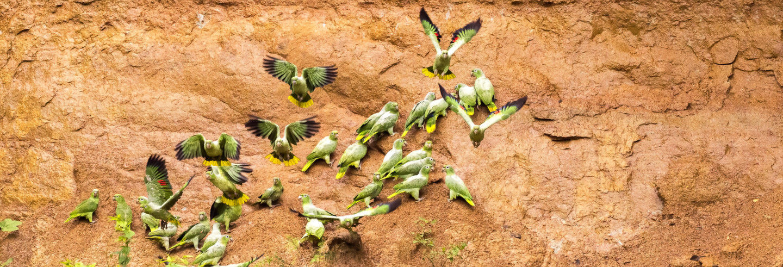 Escursione ad una collpa di pappagalli e are