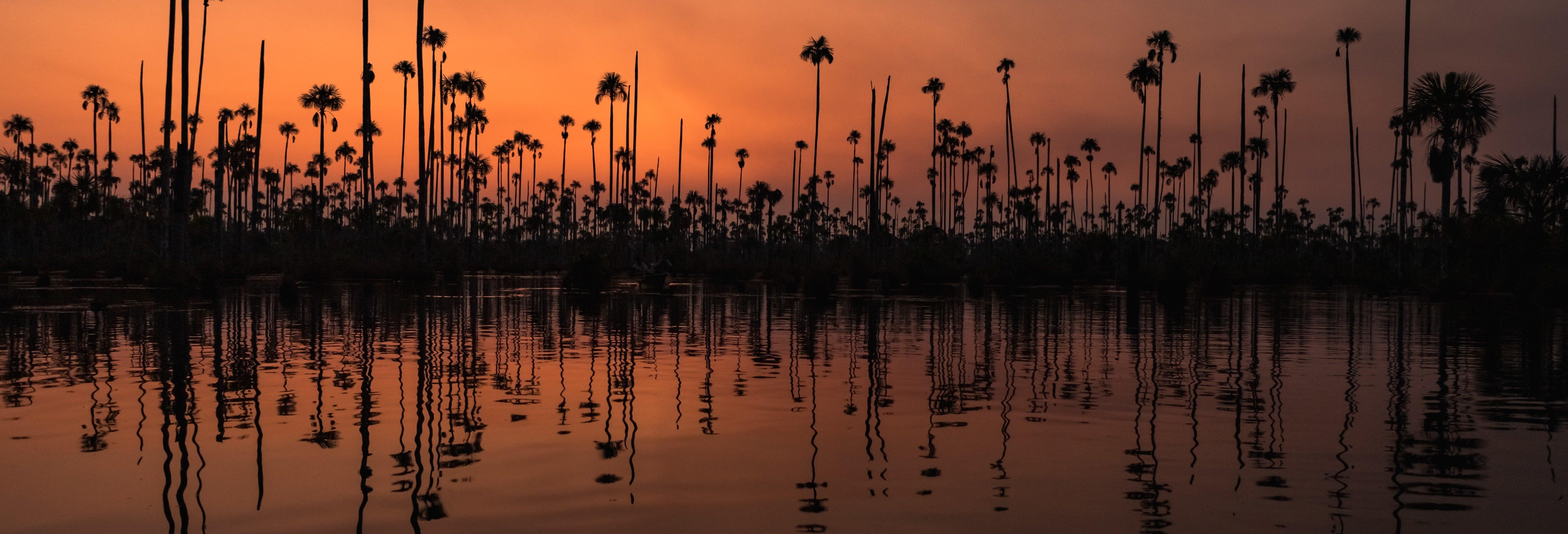 Trilha noturna pela selva amazônica