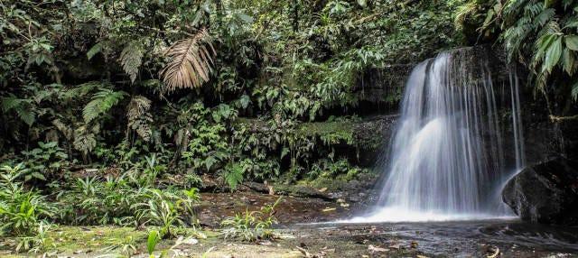 Tour de 4 días por el Parque Nacional Cordillera Azul