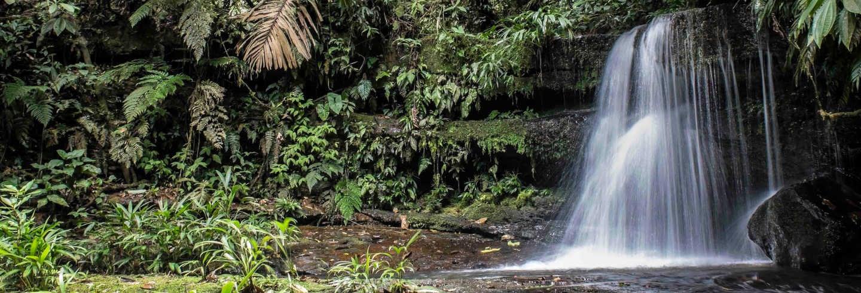 Cordillera Azul National Park 4 Day Tour