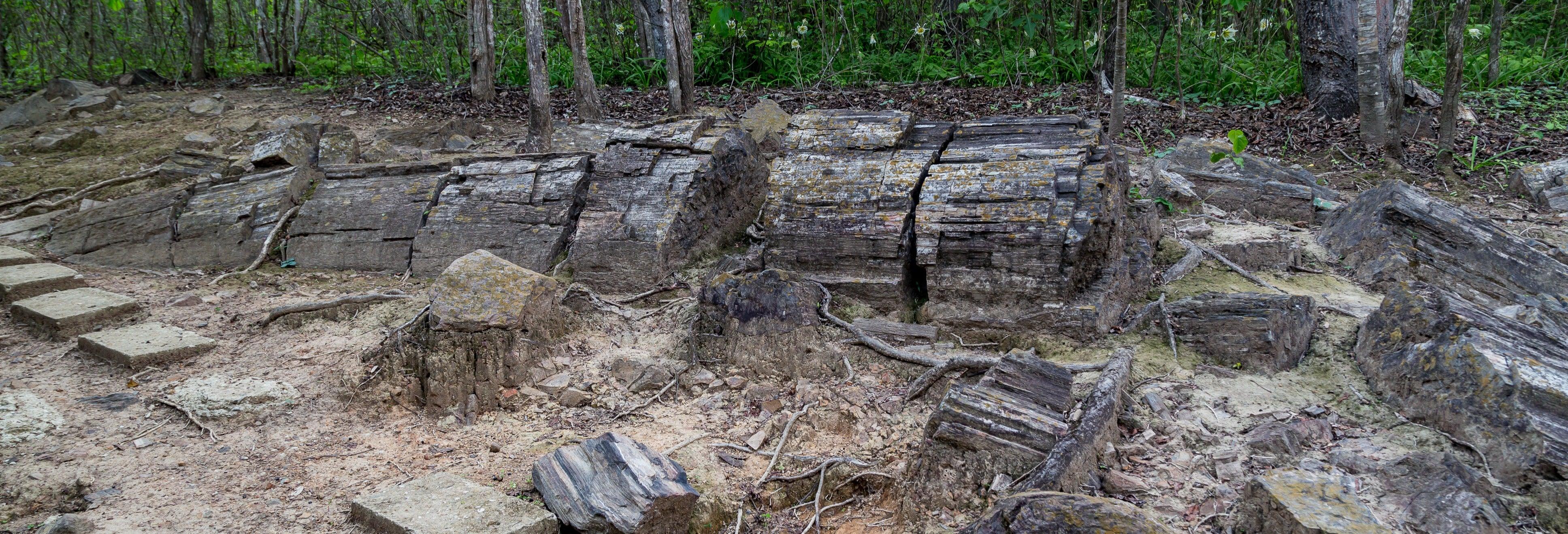 Excursión al bosque petrificado de Puyango