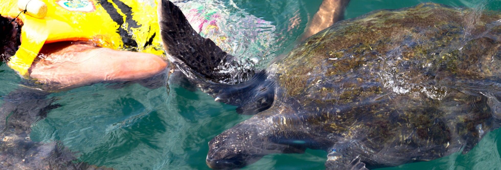 Nado con tortugas en El Ñuro + Playa de Máncora