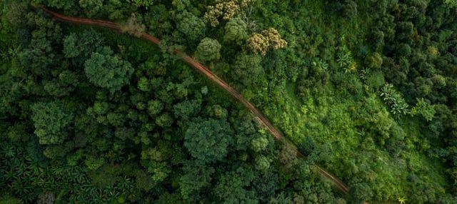 Free tour por el Poznan alternativo ¡Gratis!