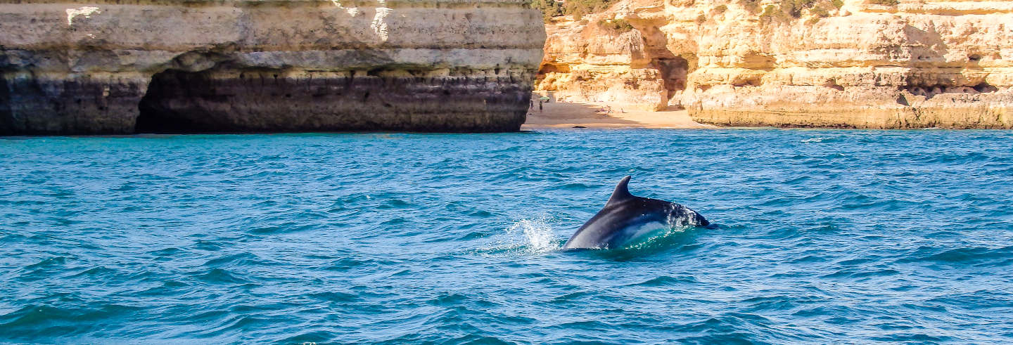 Dolphin Watching in Albufeira