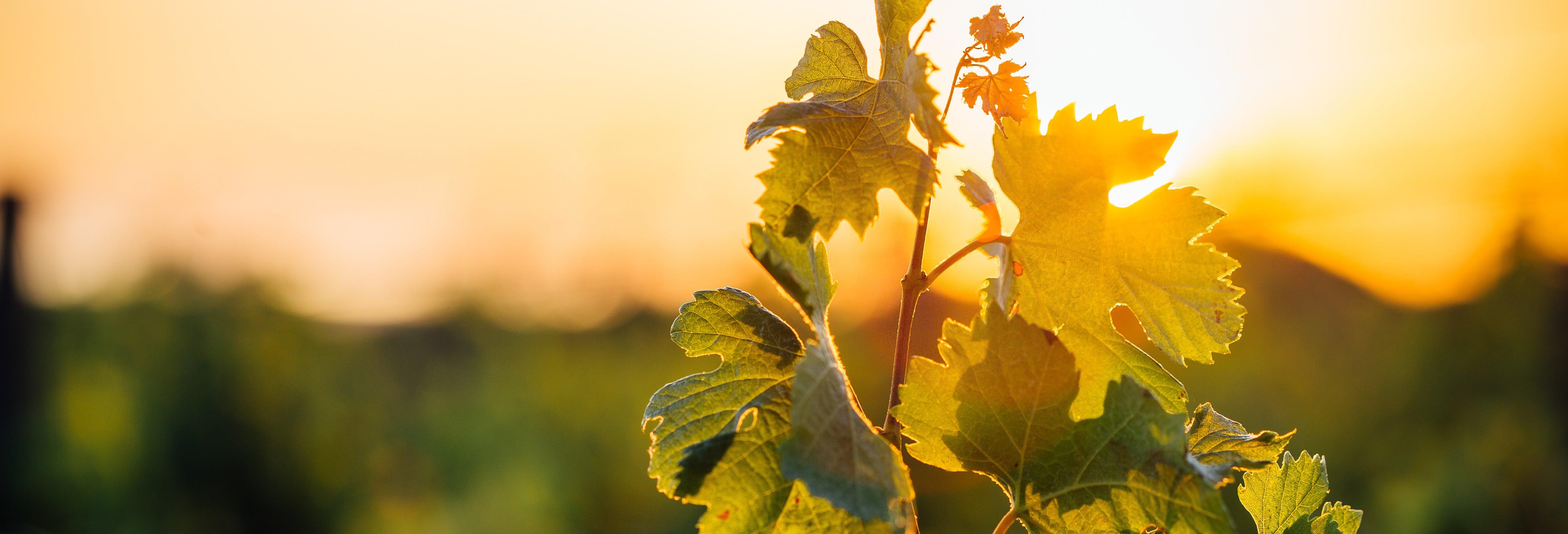 Tour del vino por la región del Dão