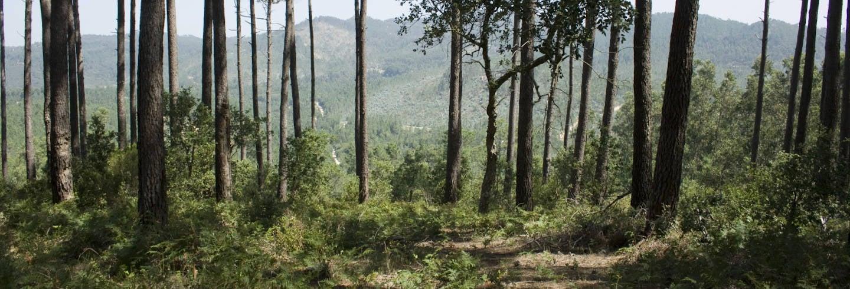 Tour del Parco naturale di Sintra-Cascais in bici