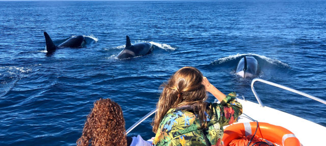 Avistamiento de delfines en Faro