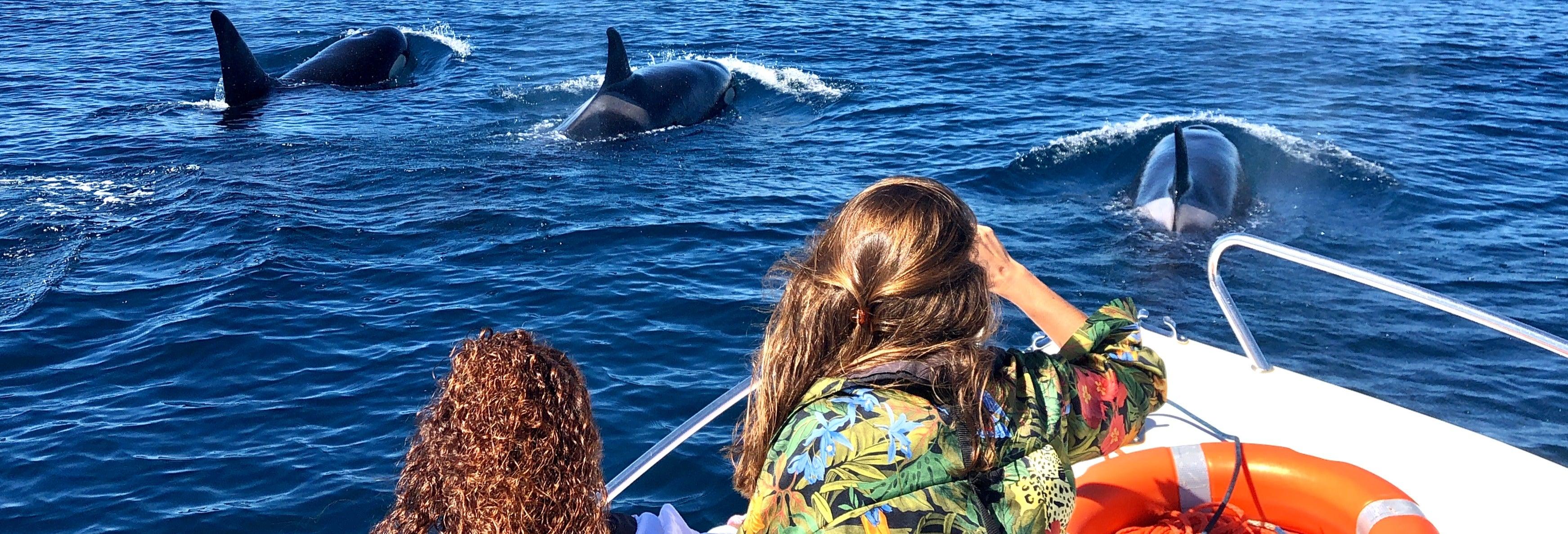 Avistamento de golfinhos em Faro