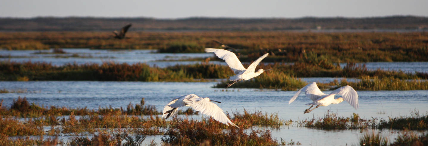 Ria Formosa Bird Watching