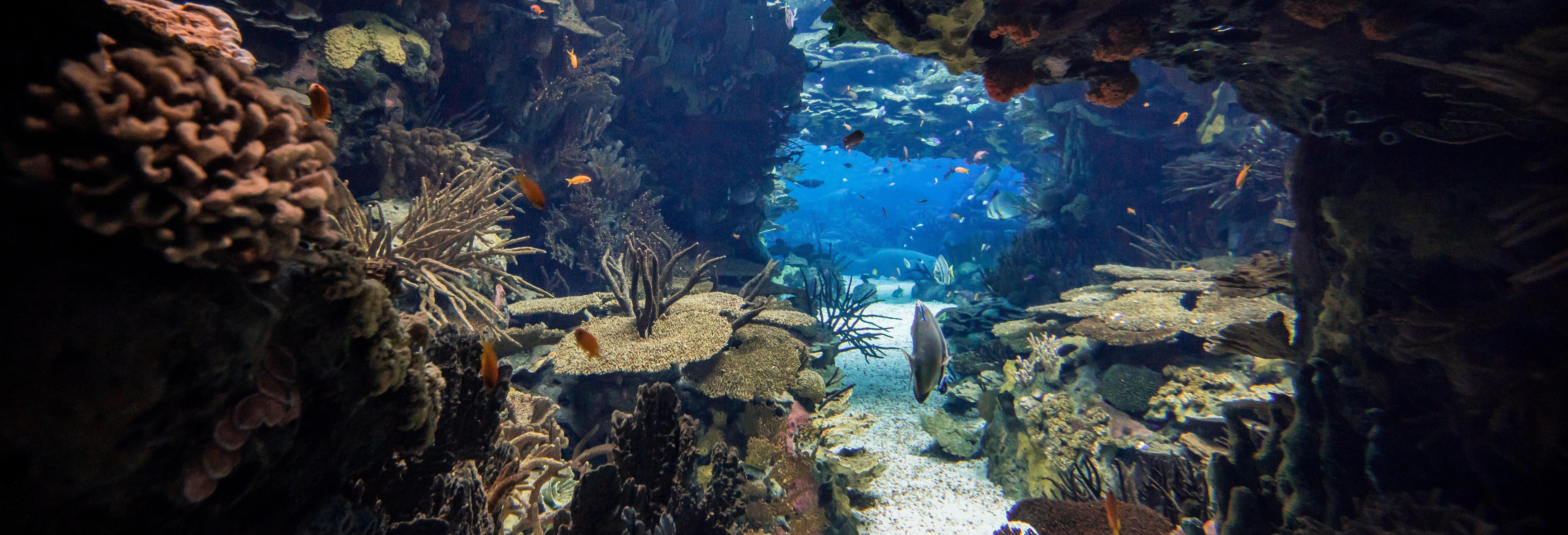 Billet pour l'Oceanarium de Lisbonne